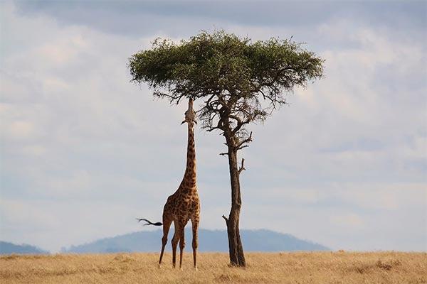 Mejor época para viajar a África