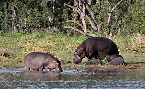 África de Safari